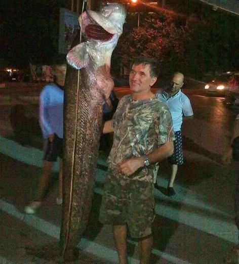 Сомът рекордьор, уловен от Моряка, е 252 см и 104 кг