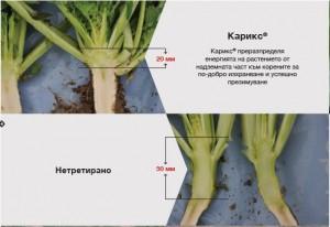 Карикс®: Оптимални размери на кореновата шийка за успешно презимуване
