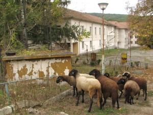 Бившият пионерски лагер тъне в разруха и в него пасат овце
