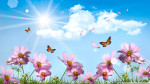 butterflies_and_cosmos_flowers-wallpaper-1920x1080