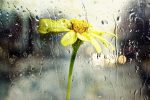 rain-glass-nature-wet-window-flower_121-68165