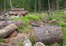 Разследват незаконна сеч на 200 дървета в Момин сбор