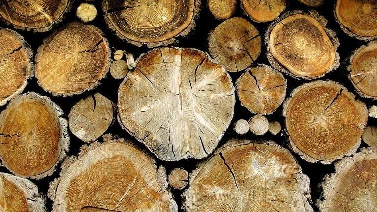 Полицията разследва незаконна сеч на над 140 кубика дърва