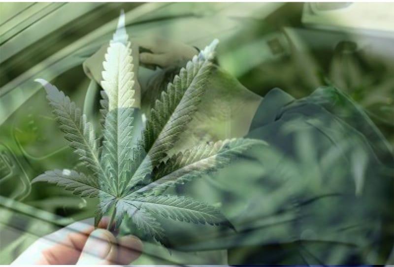 Наркотични вещества иззеха служители на полицейското управление в Свищов