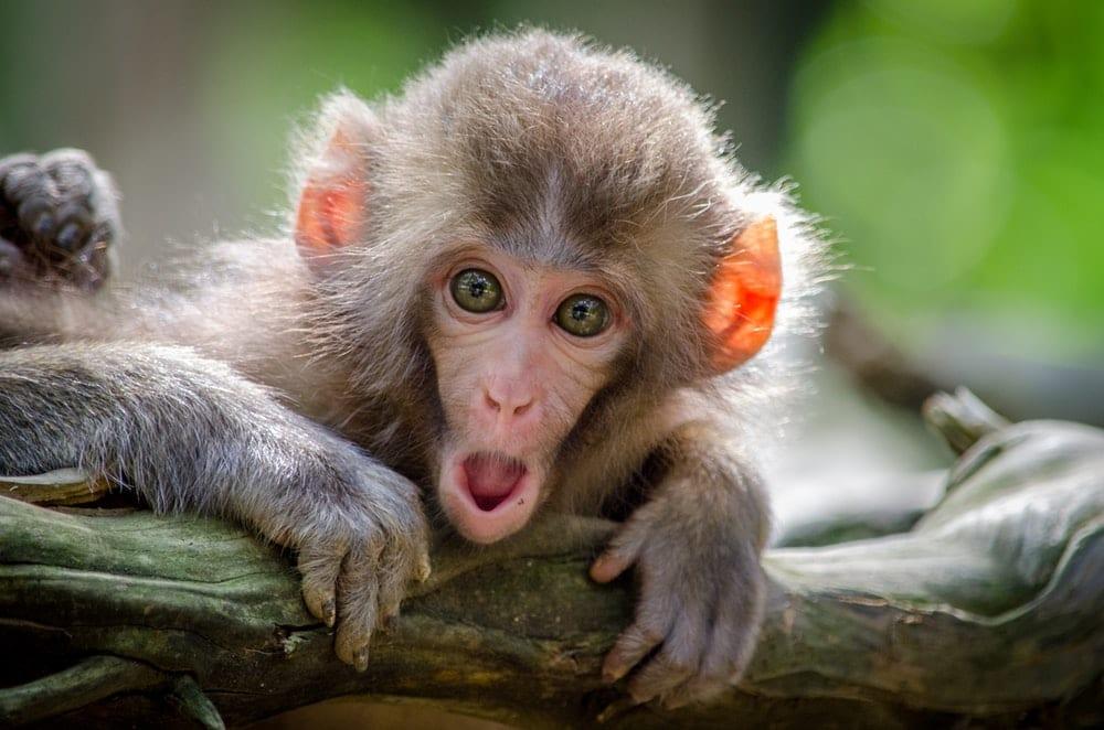 Споделянето на храна при маймуните било като покана за романтична вечеря при хората