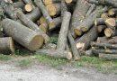 Незаконно добита дървесина, установиха при съвместна проверка горски и полицаи в две жилища в с. Росица