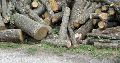 Изсекли неправомерно 1480 дървета в Момин сбор