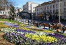 Над 600 дървета и 1200 цветя засадени за година в областния център