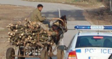 Незаконно добита дървесина установиха служители на РУ – Павликени и П. Тръмбеш