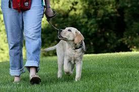 """Глобиха със 100 лв. търновец за разходка на куче в парк """"Марно поле"""""""