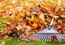 Събраните есенни листа от Велико Търново отиват за тор