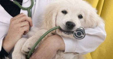 Община Велико Търново осигурява безплатна кастрация на кучета