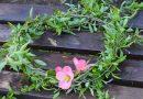 Синодът: Няма да раздаваме върба и цветя на Цветница