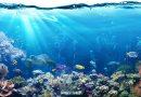 Затоплянето на океанските дълбини застрашава морския живот