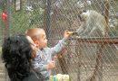 В зоопарка в Павликени се родиха 20 екзотични бебета, отново приема посетители