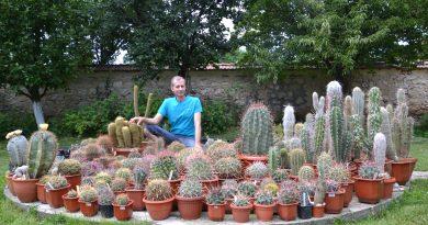 Търновец отглежда над 1000 кактуса в градината си