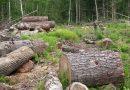 5 кубика дърва намерени в Ореш