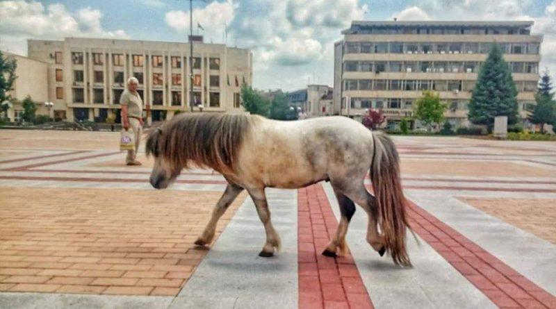 Пони препуска по улиците на Горна Оряховица