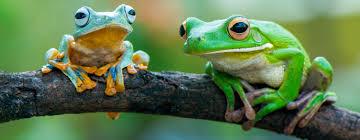 Жабите също имат хареми
