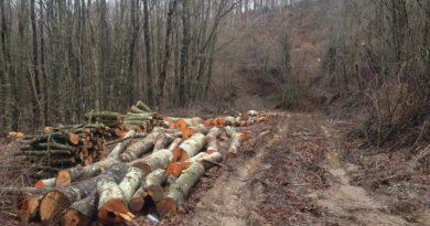 Спад на дърводобива във Великотърновско