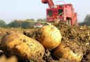 Разпределят се 56,6 млн. лева за животновъдите и производителите на картофи