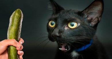 Краставица е злодеят в първия хорър за котки