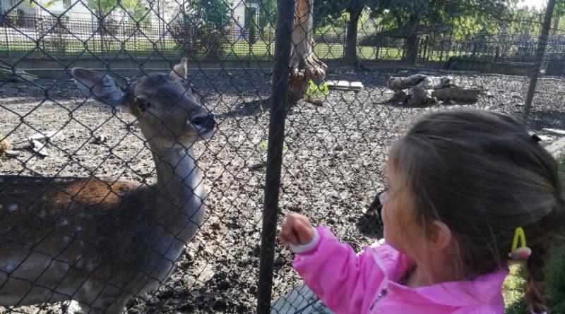 Зоопаркът в Павликени стана дом на кенгуру албинос и ему, подновиха лиценза му за още 5 години