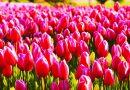 Поздрав за 8 март от Явор Божанков