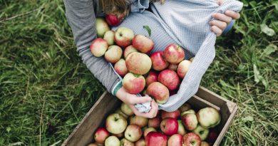 Колко от плодовете и зеленчуците у нас са родно производство