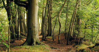 Поставят под закрила 766 дка вековни гори – дом на удивително биоразнообразие, в Церова кория и Момин сбор