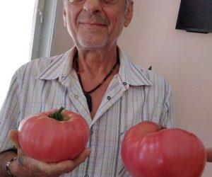 Домати от по 1,2 кг отглежда в Еленско начинаещ земеделец