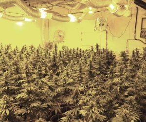 Скандално! Наркофермер се спогоди с прокуратурата за 1,11 г. условно, след като бе спипан с дрога за над 100 000 лв.