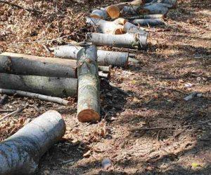 Социално слаби, подпомогнати с дърва, спипани за незаконна сеч