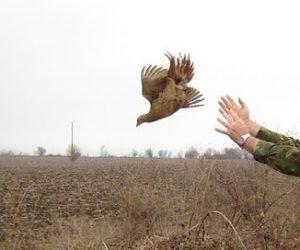2700 фазана разселват горнооряховските ловджии